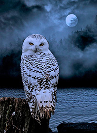 better owl moon